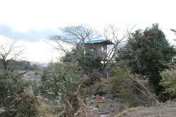 treehouse0604-3.jpg